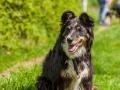 Hundefreunde_Marburg_Gassi_Treffen_Hund_Hunde_Freunde_Coelbe_Spaziergang (34).jpg