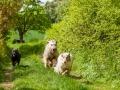 Hundefreunde_Marburg_Gassi_Treffen_Hund_Hunde_Freunde_Coelbe_Spaziergang (41).jpg