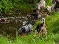 Hundefreunde_Marburg_Gassi_Treffen_Hund_Hunde_Freunde_Coelbe_Spaziergang (69).jpg
