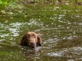 Hundefreunde_Marburg_Gassi_Treffen_Hund_Hunde_Freunde_Coelbe_Spaziergang (70).jpg