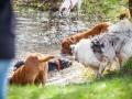 Hundefreunde_Marburg_Hundefotografie_Tierfotografie_HemlepFotografie_Gassi_Spaziergang_Hund_Coelbe_MR_Spass_Gruppe_Hunde (16).jpg