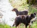 Hundefreunde_Marburg_Hundefotografie_Tierfotografie_HemlepFotografie_Gassi_Spaziergang_Hund_Coelbe_MR_Spass_Gruppe_Hunde (23).jpg