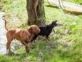 Hundefreunde_Marburg_Hundefotografie_Tierfotografie_HemlepFotografie_Gassi_Spaziergang_Hund_Coelbe_MR_Spass_Gruppe_Hunde (28).jpg