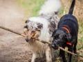 Hundefreunde_Marburg_Hundefotografie_Tierfotografie_HemlepFotografie_Gassi_Spaziergang_Hund_Coelbe_MR_Spass_Gruppe_Hunde (32).jpg
