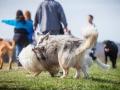 Hundefreunde_Marburg_Hundefotografie_Tierfotografie_HemlepFotografie_Gassi_Spaziergang_Hund_Coelbe_MR_Spass_Gruppe_Hunde (45).jpg
