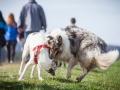 Hundefreunde_Marburg_Hundefotografie_Tierfotografie_HemlepFotografie_Gassi_Spaziergang_Hund_Coelbe_MR_Spass_Gruppe_Hunde (48).jpg