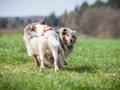 Hundefreunde_Marburg_Hundefotografie_Tierfotografie_HemlepFotografie_Gassi_Spaziergang_Hund_Coelbe_MR_Spass_Gruppe_Hunde (53).jpg