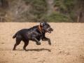 Hundefreunde_Marburg_Hundefotografie_Tierfotografie_HemlepFotografie_Gassi_Spaziergang_Hund_Coelbe_MR_Spass_Gruppe_Hunde (56).jpg