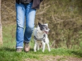 Hundefreunde_Marburg_Hundefotografie_Tierfotografie_HemlepFotografie_Gassi_Spaziergang_Hund_Coelbe_MR_Spass_Gruppe_Hunde (68).jpg