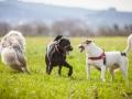 Hundefreunde_Marburg_Hundefotografie_Tierfotografie_HemlepFotografie_Gassi_Spaziergang_Hund_Coelbe_MR_Spass_Gruppe_Hunde (72).jpg