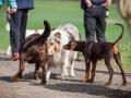 Hundefreunde_Marburg_Hundefotografie_Tierfotografie_HemlepFotografie_Gassi_Spaziergang_Hund_Coelbe_MR_Spass_Gruppe_Hunde (8).jpg