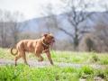 Hundefreunde_Marburg_Hundefotografie_Tierfotografie_HemlepFotografie_Gassi_Spaziergang_Hund_Coelbe_MR_Spass_Gruppe_Hunde (83).jpg