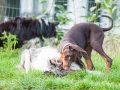 Hundefreunde_Marburg_Hunde_Spaziergang_Treffen_Dobermann_Collie_Windhund_Mischling_Leonberger_Border_Collie_Maggy_Gaia_Spencer_Alice_Mascha_Arya (132).jpg