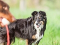 Hundefreunde_Marburg_Hunde_Spaziergang_Treffen_Dobermann_Collie_Windhund_Mischling_Leonberger_Border_Collie_Maggy_Gaia_Spencer_Alice_Mascha_Arya (26).jpg