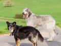 Hundefreunde_Marburg_Hunde_Spaziergang_Treffen_Dobermann_Collie_Windhund_Mischling_Leonberger_Border_Collie_Maggy_Gaia_Spencer_Alice_Mascha_Arya (30).jpg