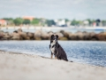 Hundemaechen_Maggy_Border_Collie_Mischling_Eckernfoerde_Hundestrand_Ostsee_Schleswig-Holstein_Strand_Sand_Meer (45)