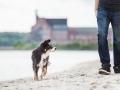 Hundemaechen_Maggy_Border_Collie_Mischling_Eckernfoerde_Hundestrand_Ostsee_Schleswig-Holstein_Strand_Sand_Meer (9)