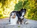 Hundemaedchen_Hundefotografie_Urlaub_Spaziergang_Hund_Gaia_MAggy_Rough_Border_Collie_Langhaarcollie_Mischling_Hundefreunde_Moor (1)