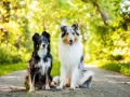 Hundemaedchen_Hundefotografie_Urlaub_Spaziergang_Hund_Gaia_MAggy_Rough_Border_Collie_Langhaarcollie_Mischling_Hundefreunde_Moor (6)