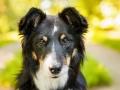 Hundemaedchen_Hundefotografie_Urlaub_Spaziergang_Hund_Maggy_Border_Collie_Mischling_tricolor_Moor (6)