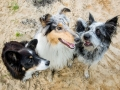 Hundemaedchen_Maggy_Gaia_Rough_Collie_Bordercollie_Border_Mischling_Hundefreunde_Kaszah_Spaziergang_Urlaub (10)