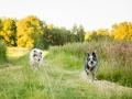 Hundemaedchen_Maggy_Gaia_Rough_Collie_Bordercollie_Border_Mischling_Hundefreunde_Kaszah_Spaziergang_Urlaub (18)