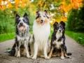 Hundemaedchen_Maggy_Gaia_Rough_Collie_Bordercollie_Border_Mischling_Hundefreunde_Kaszah_Spaziergang_Urlaub (40)