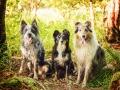 Hundemaedchen_Maggy_Gaia_Rough_Collie_Bordercollie_Border_Mischling_Hundefreunde_Kaszah_Spaziergang_Urlaub (9)