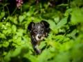 Border_Collie_Mischling_maggy_Senior_tricolor_Marburg_Lahn_wasser_Fluss_spielen_Hund_Hundefotografie_Tierfotografie (23)