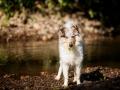 Langhaarcollie_Rough_Collie_Gaia_bluemerle_Welpe_baby_tierbaby_hundebaby_Hundewelpe_puppy_Marburg_Lahn_fluss_wasser_Hundefotografie_Tierfotografie_Hund (17)