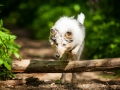 Langhaarcollie_Rough_Collie_Gaia_bluemerle_Welpe_baby_tierbaby_hundebaby_Hundewelpe_puppy_Marburg_Lahn_fluss_wasser_Hundefotografie_Tierfotografie_Hund (37)