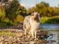 Hundemaedchen_Hundeseite_Hundefotografie_Hund_Wasserspass_Wasser_Lahn_Schwimmen_Gaia_Langhaarcollie_Collie_bluemerle_Lassie (15)