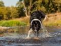 Hundemaedchen_Hundeseite_Hundefotografie_Hund_Wasserspass_Wasser_Lahn_Schwimmen_Joey_Border_Collie_Mix_Huetehund (10)