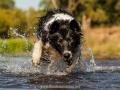 Hundemaedchen_Hundeseite_Hundefotografie_Hund_Wasserspass_Wasser_Lahn_Schwimmen_Joey_Border_Collie_Mix_Huetehund (17)