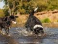 Hundemaedchen_Hundeseite_Hundefotografie_Hund_Wasserspass_Wasser_Lahn_Schwimmen_Joey_Border_Collie_Mix_Huetehund (18)