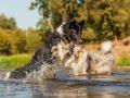 Hundemaedchen_Hundeseite_Hundefotografie_Hund_Wasserspass_Wasser_Lahn_Schwimmen_Joey_Border_Collie_Mix_Huetehund (22)