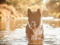 Hundemaedchen_Hundeseite_Hundefotografie_Hund_Wasserspass_Wasser_Lahn_Schwimmen_Joey_Border_Collie_Mix_Huetehund (23)