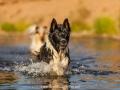 Hundemaedchen_Hundeseite_Hundefotografie_Hund_Wasserspass_Wasser_Lahn_Schwimmen_Joey_Border_Collie_Mix_Huetehund (31)