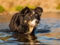 Hundemaedchen_Hundeseite_Hundefotografie_Hund_Wasserspass_Wasser_Lahn_Schwimmen_Maggy_Border_Collie_Mix_Mischling_tricolor (14)
