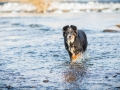 Hundefotografie_Marburg_Border_Collie_Mischling_Maggy_Fotografin_Christine_Hemlep_Wasser-Lahn_Fluss (2)