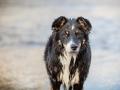 Hundefotografie_Marburg_Border_Collie_Mischling_Maggy_Fotografin_Christine_Hemlep_Wasser-Lahn_Fluss (39)