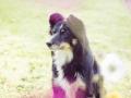 Border_Collie_Mischlingshund_Mischling_hund_Maggy_tricolor_wiese_Hundefotografie_Marburg_Tierfotografie (5).jpg