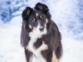 Hundemaedchen_Maggy_Border_Collie_Mischling_Mix_Winter_Schnee_Hundefotografie_Marburg (1)
