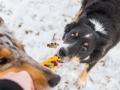 Hundemaedchen_Maggy_Border_Collie_Mischling_Mix_Winter_Schnee_Hundefotografie_Marburg (15)