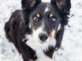 Hundemaedchen_Maggy_Border_Collie_Mischling_Mix_Winter_Schnee_Hundefotografie_Marburg (21)