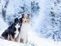 Hundemaedchen_Maggy_Gaia_Border_Rough_Collie_Mix_Hundefreunde_Freunde_Winter_Schnee_Hundefotografie_Marburg (1)