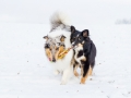 Hundemaedchen_Maggy_Gaia_Border_Rough_Collie_Mix_Hundefreunde_Freunde_Winter_Schnee_Hundefotografie_Marburg (11)