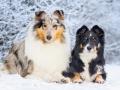 Hundemaedchen_Maggy_Gaia_Border_Rough_Collie_Mix_Hundefreunde_Freunde_Winter_Schnee_Hundefotografie_Marburg (17)