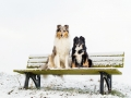 Hundemaedchen_Maggy_Gaia_Border_Rough_Collie_Mix_Hundefreunde_Freunde_Winter_Schnee_Hundefotografie_Marburg (5)