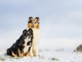 Hundemaedchen_Maggy_Gaia_Border_Rough_Collie_Mix_Hundefreunde_Freunde_Winter_Schnee_Hundefotografie_Marburg (7)